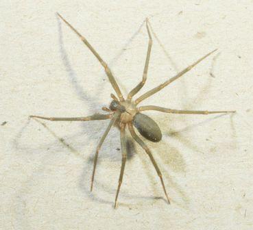 Örümcekle Mücadele